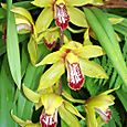 Orchids_in_carmel