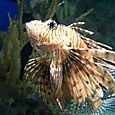 Fish_in_aquarium_in_las_vegas
